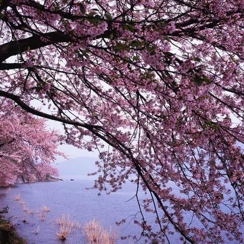 1204-66 Scan奥琵琶湖271.jpg