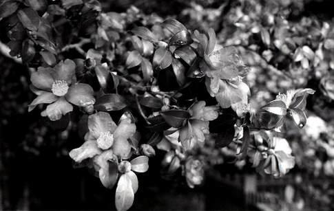 1812 NikonF img014/Scan by Epson GT-X970.jpg