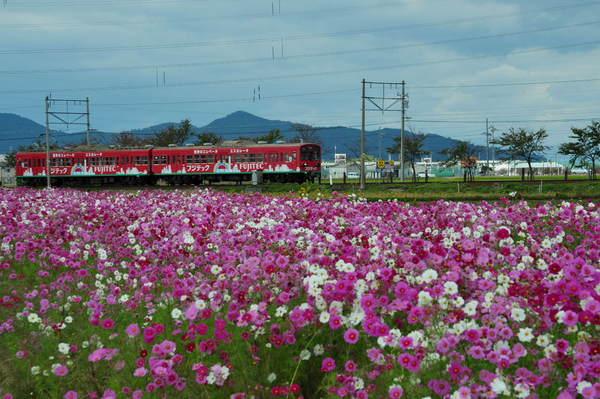近江鉄道DSC_5706.jpg