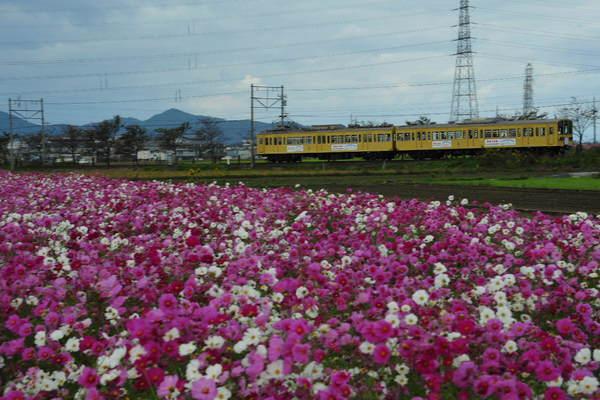 近江鉄道DSC_5741.jpg